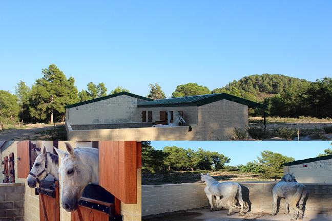 caballos masia villalonga 26_9_2013