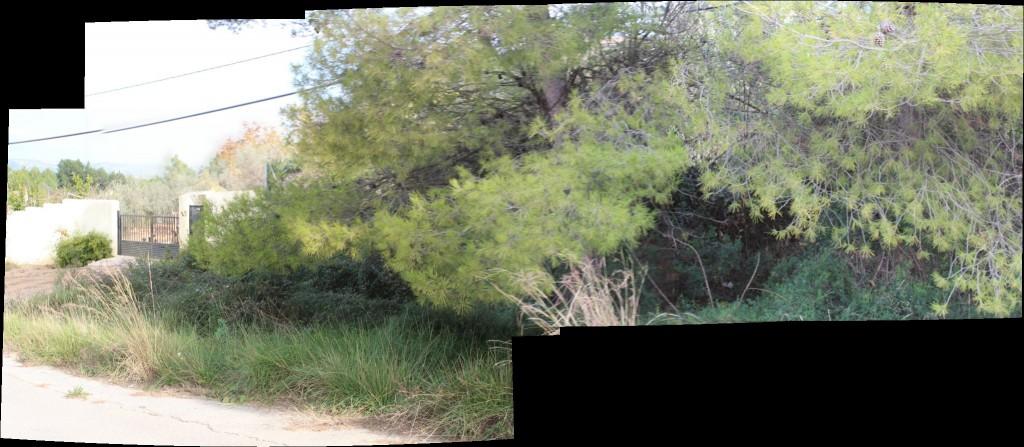 panoramica pinos frente tica antes